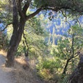 Valley View Trail.- Valley View + Pfeiffer Falls Trail Hike