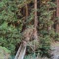 The footbridge crossing Partington Creek. - Partington Cove