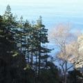 Partington Cove Trail in Julia Pfeiffer Burns State Park.- Partington Cove