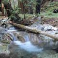 Hare Creek Trail in Limekiln State Park.- Limekiln State Park