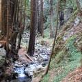 Limekiln Creek. - Limekiln State Park