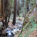The Limekiln Trail follows the west fork of Limekiln Creek through a dense redwood forest.- Limekiln Trail