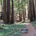 Limekiln Trail.- Limekiln Trail