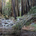 Hare Creek flows adjacent to Hare Creek Trail.- Hare Creek Trail