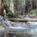 Clear pools form as Hare Creek cascades through a peaceful redwood canyon.- Hare Creek Trail