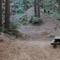 Redwood campsite in Limekiln State Park Campground.- Limekiln State Park Campground