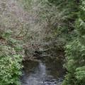 Sutton Creek runs through the campground.- Sutton Campground