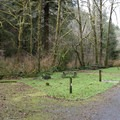 Nearly all the sites are between the campground road and Cape Creek.- Cape Perpetua Campground