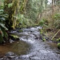 Cape Creek runs alongside Cape Perpetua Campground.- Cape Perpetua Campground
