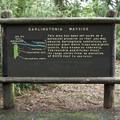 A sign explaining the Darlingtonia californica preserve.- Darlingtonia State Natural Site