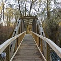 The new Adkison bridge in the Water Garden.- Mount Pisgah Arboretum Hike