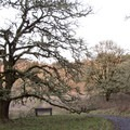The Oak Savannah.- Mount Pisgah Arboretum Hike