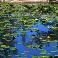 Echo Lake.- Lake Aloha