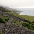 Lupine and coast.- The Lost Coast Trail