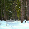 More quiet wildnerness at Lake Wenatchee.- Lake Wenatchee State Park North Loop