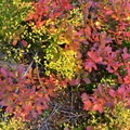 Fall foliage.- Round the Mountain Trail