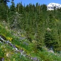 Mountain stream, wildflowers, and Mount Adams (12,281').- Round the Mountain Trail