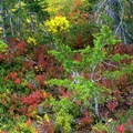Beautiful fall colors around Mount Adams.- Round the Mountain Trail