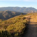 The summit ridge of Mount Tamalpais is made up of three peaks. Right to left: East Peak (2,571'), Middle Peak (2,490'), and West Peak (2,560'). This view is from Coyote Ridge Trail in the Marin Headlands.- Mount Tamalpais State Park