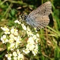 Unidentified species (help us identify it by providing feedback).- Owl Point Hike