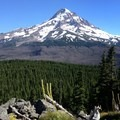 Mount Hood (11,249') showcasing the Dollar Lake wildfire burn zone.- Owl Point Hike