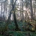 The forest provides shade for much of the hike.- Dimple Hill