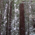 Second-growth forest.- Kelcema Lake