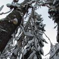 Looking up at some fungi.- Kelcema Lake
