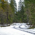 Depending on snowfall, the road to the Ramona Falls trailhead may require skiing along the roadsides.- Sandy River Trail