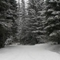 The road to the loop trailhead, which is driveable in summer.- Gold Creek Pond Loop
