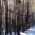 The East Loop, passing through the 2012 burn.- Tronsen Meadow-East Loop