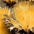 Unidentified species (help us identify it by providing feedback).- Blue Rock Springs Park