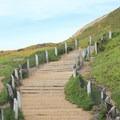 Sand ladder at Fort Funston.- Fort Funston