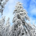 A winter wonderland awaits on the way to Barlow Ridge Hut.- Barlow Ridge Hut