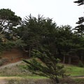 Cyprus trees on the trail to Gray Whale Beach.- Gray Whale Cove State Beach
