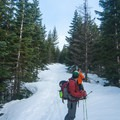 The skin track from the parking lot is part of a network of cross-country ski trails through the sub-alpine forest.- Mount St. Helens Worm Flows Backcountry Ski
