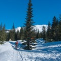 Many people opt to setup a base camp just below treeline, which lies about 2 miles from the trailhead.- Mount St. Helens Worm Flows Backcountry Ski