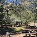 Bootjack Campground picnic area.- Bootjack Campground
