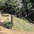 Two of Mount Tam State Parks premier trails - Bootjack Trail and Matt Davis Trail - run through the campground.- Bootjack Campground