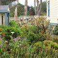 Hostel gardens.- Point Montara Lighthouse Hostel