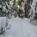 Route through the forest.- Lanham Lake
