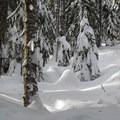Steepening slopes through the forest.- Lanham Lake