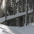 Wind blowning snow from the trees.- Lanham Lake