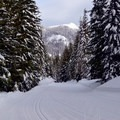 The beginning of the forested trail.- Cabin Creek Nordic Ski Area