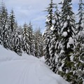 Cabin Creek Nordic Ski Area hosts several different styles of cross-country trails.- Cabin Creek Nordic Ski Area