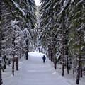 Taking a long trail down a beautiful corridor in Cabin Creek Nordic Ski Area.- Cabin Creek Nordic Ski Area