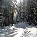 Snowfall is everywhere.- Cabin Creek Nordic Ski Area