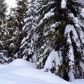 Cabin Creek Nordic Ski Area.- Cabin Creek Nordic Ski Area