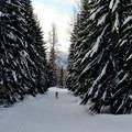 Gigantic trees frame a skater's progress through the Cabin Creek Nordic Ski Area.- Cabin Creek Nordic Ski Area