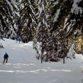 Cabin Creek Nordic Ski Area is a popular destination, and you will likely be sharing the trail with other people.- Cabin Creek Nordic Ski Area